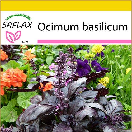 SAFLAX - Anzucht Set - Kräuter - Rotes Basilikum - 200 Samen - Mit Mini-Gewächshaus, Anzuchtsubstrat und 2 Töpfen - Ocimum basilicum