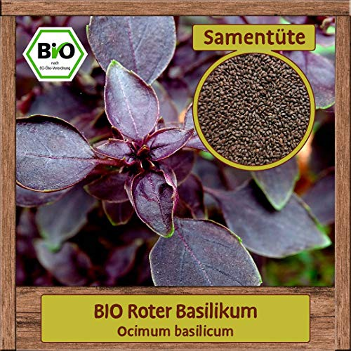 Samenliebe BIO Kräuter Samen Basilikum Roter (Ocimum basilicum) | BIO Basilikumsamen Kräutersamen | Samenfestes BIO Saatgut für 2m²