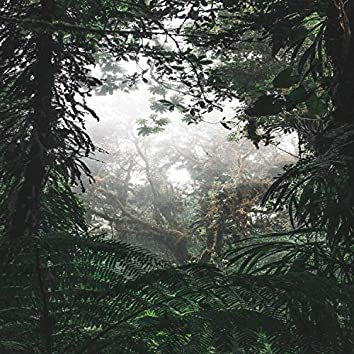 Cozy Forests