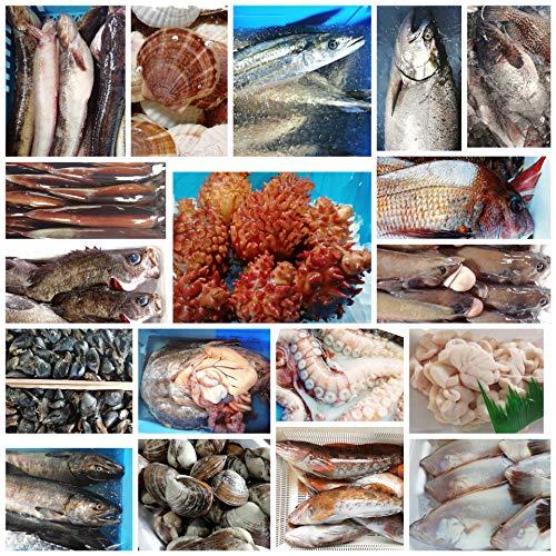 産直丸魚  (水揚げあれば即日発送) いわて北三陸、朝どれ鮮魚セット その日揚がった三陸の新鮮海産物を直送します   鮮魚ボックス 鮮魚セット 魚セット 入り合わせ
