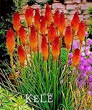 Best red hot poker flower bulbs Reviews