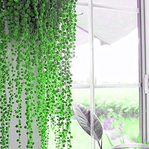 erbsenpflanze perlenschnur