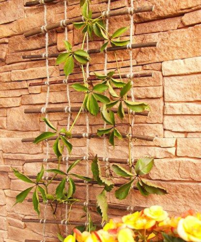 Floranica® Rankhilfe, Rankgitter, Rankleiter aus gekochter natürlicher Weide und Juteschnur bedenkenlos für Gartengemüse und Tiere, Länge: 200 cm, Breite:50 cm - 3