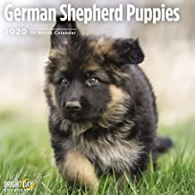 2020 German Shepherd Puppies Wall Calendar by Bright Day, 16 Month 12 x 12 Inch, Cute Dogs Animals Working Rescue Police Canine
