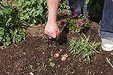 Zoom IMG-1 sunflower flor42770 piantabulbi automatico 13x8x23