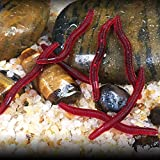 Cebo sintético para pescar, lombrices de tierra, color rojo, 80 unidades