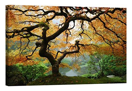 Wandbilder Startoshop, nachleuchtende Leinwandbilder oder selbstklebende Fototapete, Wandsticker, Ahorn in Herbst Wandbild, Kategorie Natur, 80 cm x 120 cm
