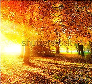 Murales 3D personalizados, Parque otoñal.Autumn Trees and Leaves in Sunlight Rays, living room sofa TV wallbedroom wallpaper-200 * 140cm