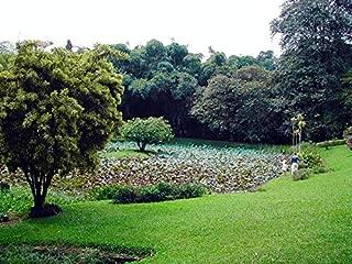 Home Comforts Sri Lanka Landscape Botanical Garden Lotus Vivid Imagery Laminated Poster Print 24 x 36