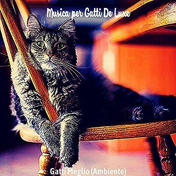 Gatti Meglio (Ambiente)
