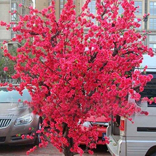 10 PCS rouge fleurs de cerisier japonais Graines Cour Jardin Bonsaï Graines Petit arbre de Sakura Graines Couleurs mélangées