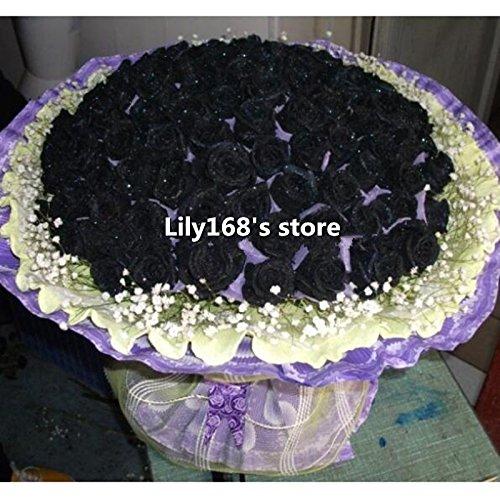Livraison gratuite Chine Rare Seeds Black Rose Fleur 10pcs Haute Qualité facile de planter la famille Jardin Graines La rosa negra Semillas