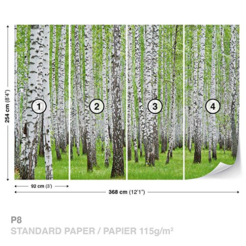 FORWALL DekoShop Fototapete Tapete Birke Wald Bäume AD157P8 (368cm x 254cm) Photo Wallpaper Mural
