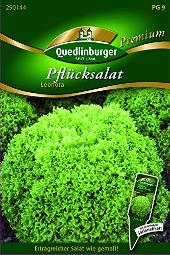 Salat Pflück- Leonora - Lactuca sativa var. acephala QLB Premium Saatgut Salate
