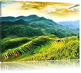 Reisfelder in Vietnam, Format: 120x80 auf Leinwand, XXL