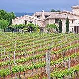 Smartbox - Caja Regalo - Clos d´Esgarracordes: Visita a los viñedos con cata y maridaje en Castellón - Ideas Regalos Originales