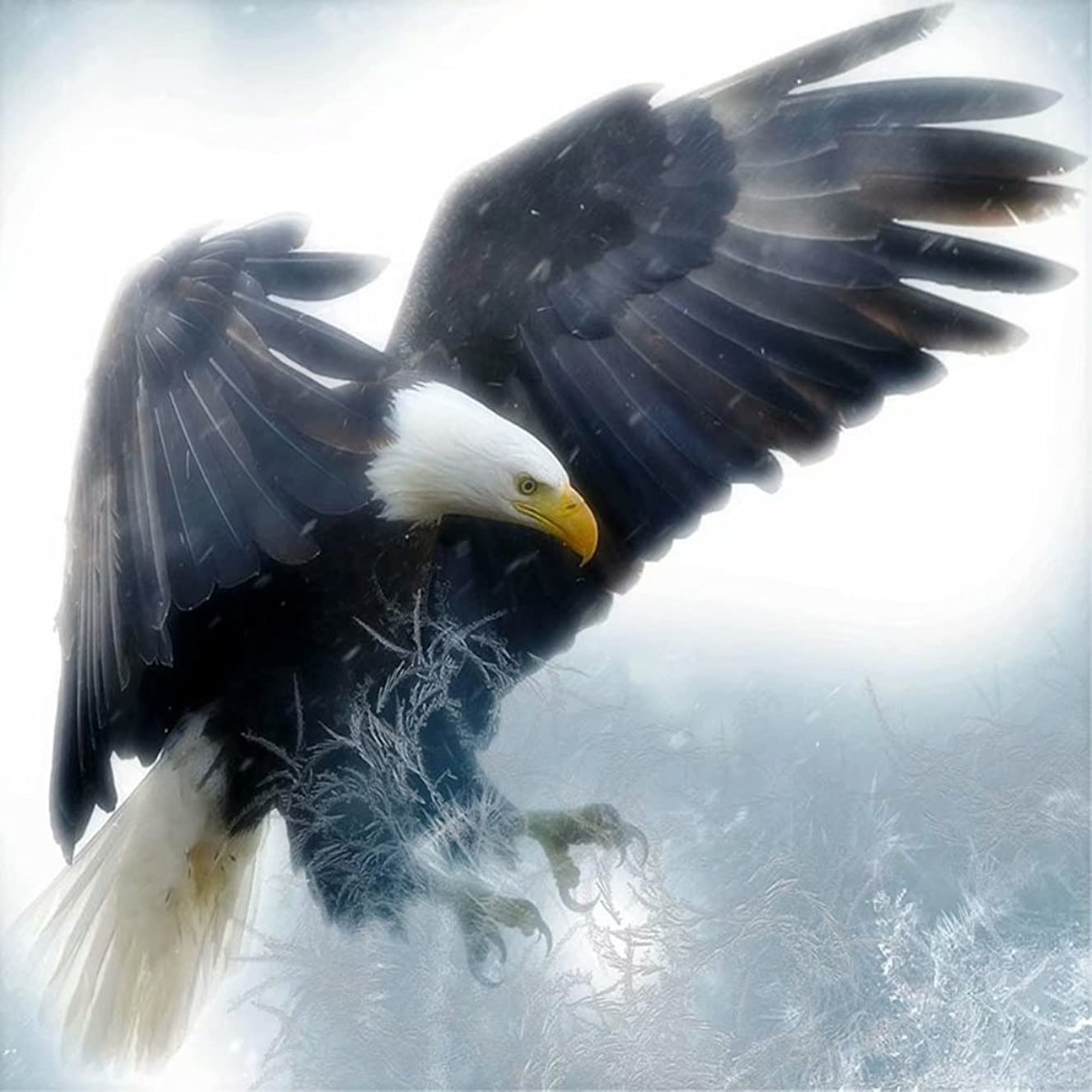 Diamond Painting by Number Kit, LPRTALK 5D DIY Diamond Painting Animal Full Square Drill Eagle Embroidery for Wall Decoration 12X12 inches (Full Drill)