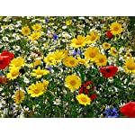 CHRISTMAS GIFT PACK Of Bee, Butterfly and Meadow Friendly Wild Flower Seeds, Beautiful Flowers in Many Colours, Great Stocking Filler, Over 1000 Seeds Per Packet, RHS Perfect for Pollinators Mix
