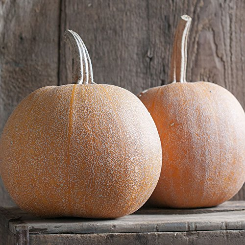 David's Garden Seeds Pumpkin Winter Luxury 9922 (Orange) 50 Non-GMO, Heirloom Seeds