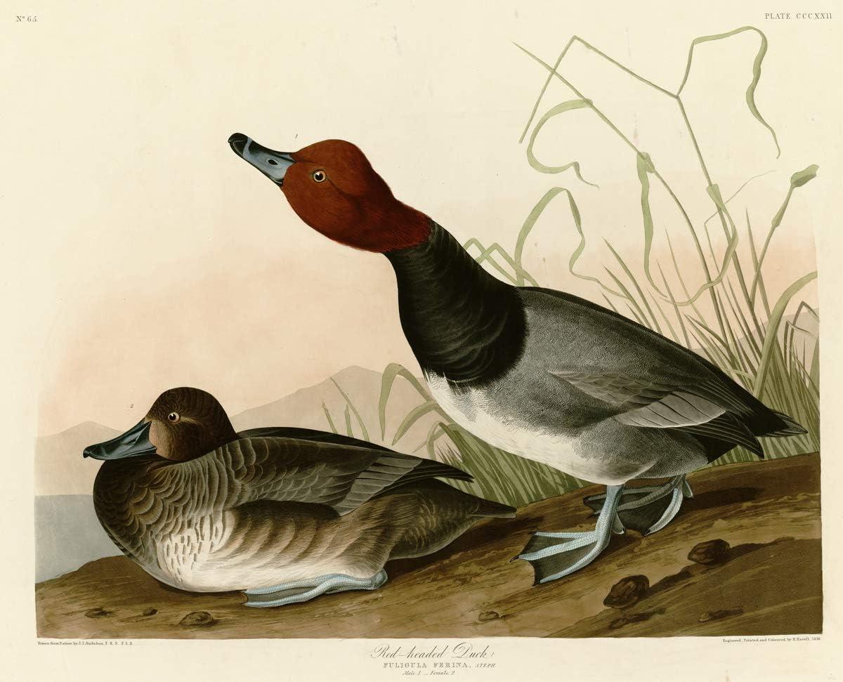 Berkin Arts John James 国内即発送 Audubon 信用 Pai Canvas-Famous Print Giclee On