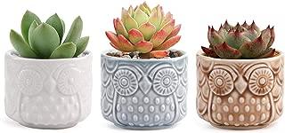 T4U Conjunto de 3 Patrón de búho de cerámica Cerámicos Planta Maceta Suculento Cactus Planta Maceta Planta Contenedor Vivero Maceta Macetas de jardín Macetas Envase