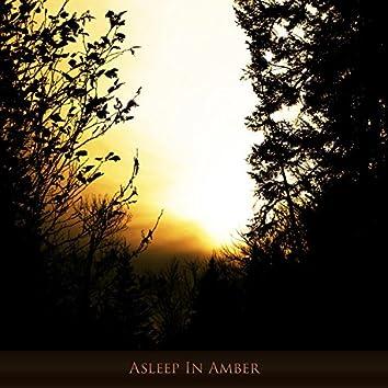 Asleep in Amber
