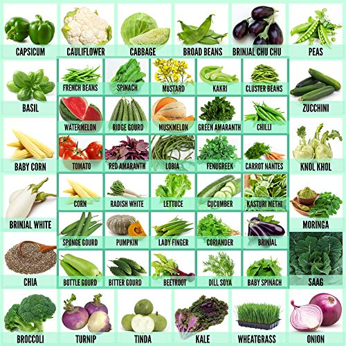 Leafy Tales 50 Varieties of Vegetable, Fruits & Herbs Seeds for Kitchen Garden - 2500+ Seeds   Easy to Grow
