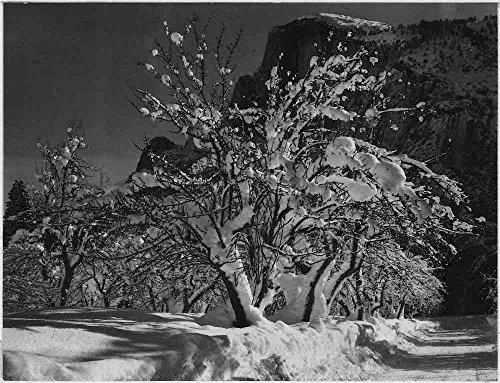 Das Museum Outlet–Adams–Half Dome, Apple Orchard, Yosemite–Poster Print Online kaufen (152,4x 203,2cm)