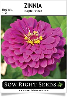 Sow Right Seeds Purple Prince Zinnia Seeds - Full Instructions for Planting, Beautiful to Plant in Your Flower Garden; Non-GMO Heirloom Seeds; Wonderful Gardening Gifts (1)