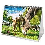 Eselzauber DIN A5 Tischkalender für 2021 Esel - Geschenkset Inhalt: 1x Kalender, 1x Weihnachts- und 1x Grußkarte (insgesamt 3 Teile)