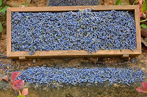 TooGet Flores Naturales de Lavanda Brotes de Lavanda Seca, Artesanías de Bricolaje, Bolsitas, Jabón, Baños Fragancia Fresca - 115g
