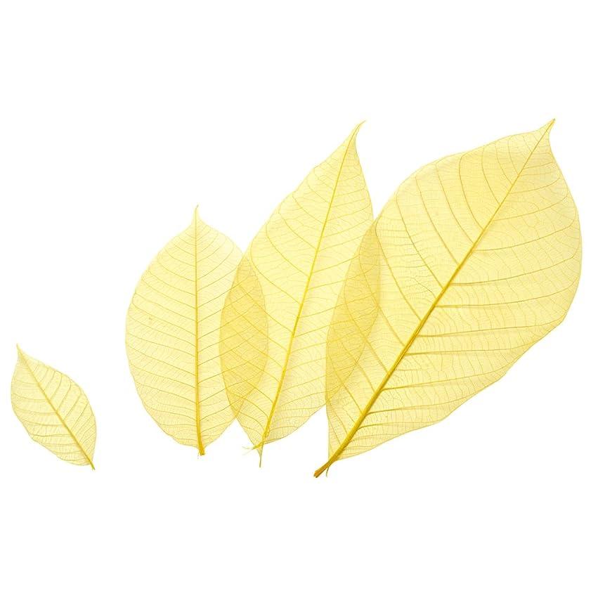 ご注意第二ご注意萬洋 カラースカシ木の葉 黄 約16cm 50入 18-788C