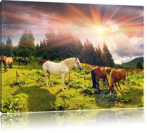 Pixxprint Mustangs Pferde auf den Bergen als Leinwandbild | Größe: 100x70 cm | Wandbild | Kunstdruck | fertig bespannt