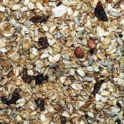 FutterXL 1kg Fettfutter Premium mit Rosinen, Nüssen und Insekten - Top Vogelfutter für Wildvögel, Gartenvögel, Waldvögel