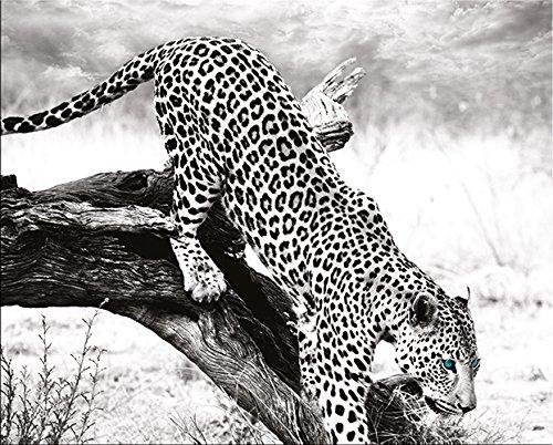artissimo, Dekopanel, Deco Panel, ca. 50x40cm, PE5806-PA, Jungle: Leopard, Bild, Wandbild, Wanddeko, Wanddekoration, Poster auf Decopanel