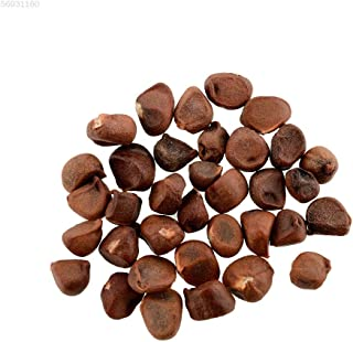 AGROBITS 3657 30pcs Vaccinium corymbosumSEE Fruit Pour maison