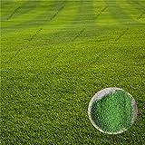 500pcs zoysia Semi di erba da prato semi verde fresco morbido Runner pianta naturale per il giardino di casa