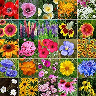 Midwest Wildflower Seed Mix- 1/4 Pound