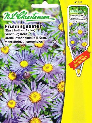 Frühlingsaster 'Wartburgstern' blau, große lavendelblaue Blüten, anspruchsvoll, mehrjährig ( mit Stecketikett) 'Aster tongolensis' Staude