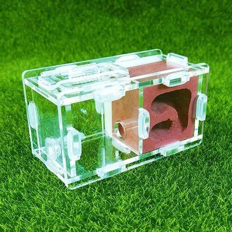 KDGPUM KDGPUM KDGPUM New Design Ant Nest DIY with Feeding