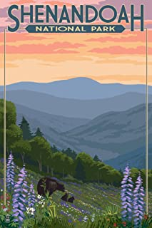 Shenandoah National Park, Virginia - Black Bear and Cubs with Flowers (9x12 Art Print, Wall Decor Travel Poster)