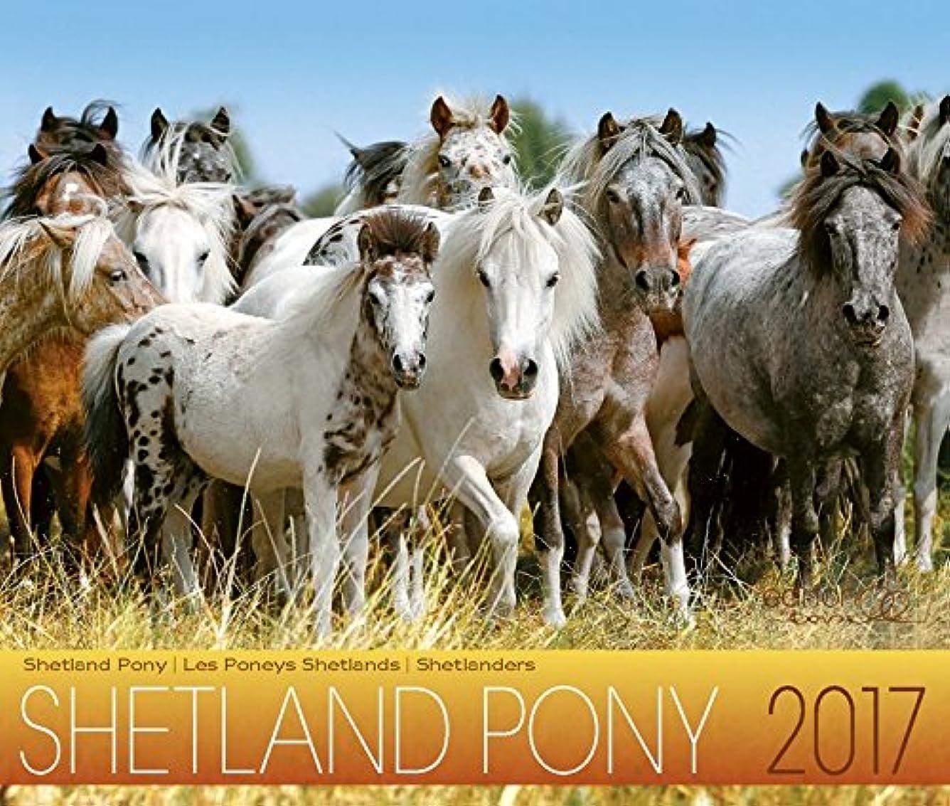 出血終わらせるずらすShetland Pony 2017: Shetland Pony