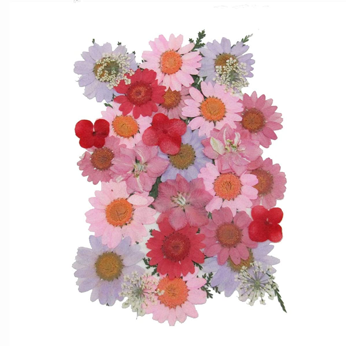 Real Mixed Multiple Dried Pressed Flowers Natural Dried Flowers for Art Craft DIY Resin