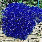 Semi di crescione, 100pcs / bag Cress Semi strisciante Fiore Decor pianta perenne giardino...