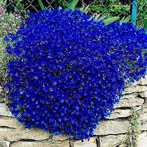 Semi di crescione, 100pcs / bag Cress Semi strisciante Fiore Decor pianta perenne giardino di terra della roccia da fiore le piante per Ideal all'aperto giardinaggio regalo