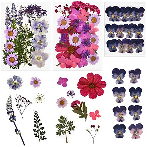 ORMAN 63pcs Real Dried Pressed Flowers Daisies Leave Petals for DIY Candle Resin Jewelry Nail Pendant Crafts and Decoration Supply Pink
