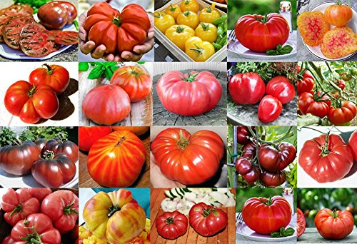 Mixed Seeds!!! This is A Mix!!! 30+ Giant Tomato Seeds, Mix of 22 Varieties, Heirloom Non-GMO, US Grown, Brandywine Black, Red, Yellow & Pink, Mr. Stripey, Old German, Black Krim, from USA