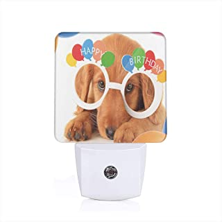 Seuriamin Birthday Decorations for Kids Puppy Dog Golden with Glasses Balloons Present Party Theme Dusk to Dawn Sensor of Garage Energy Efficient Night Light