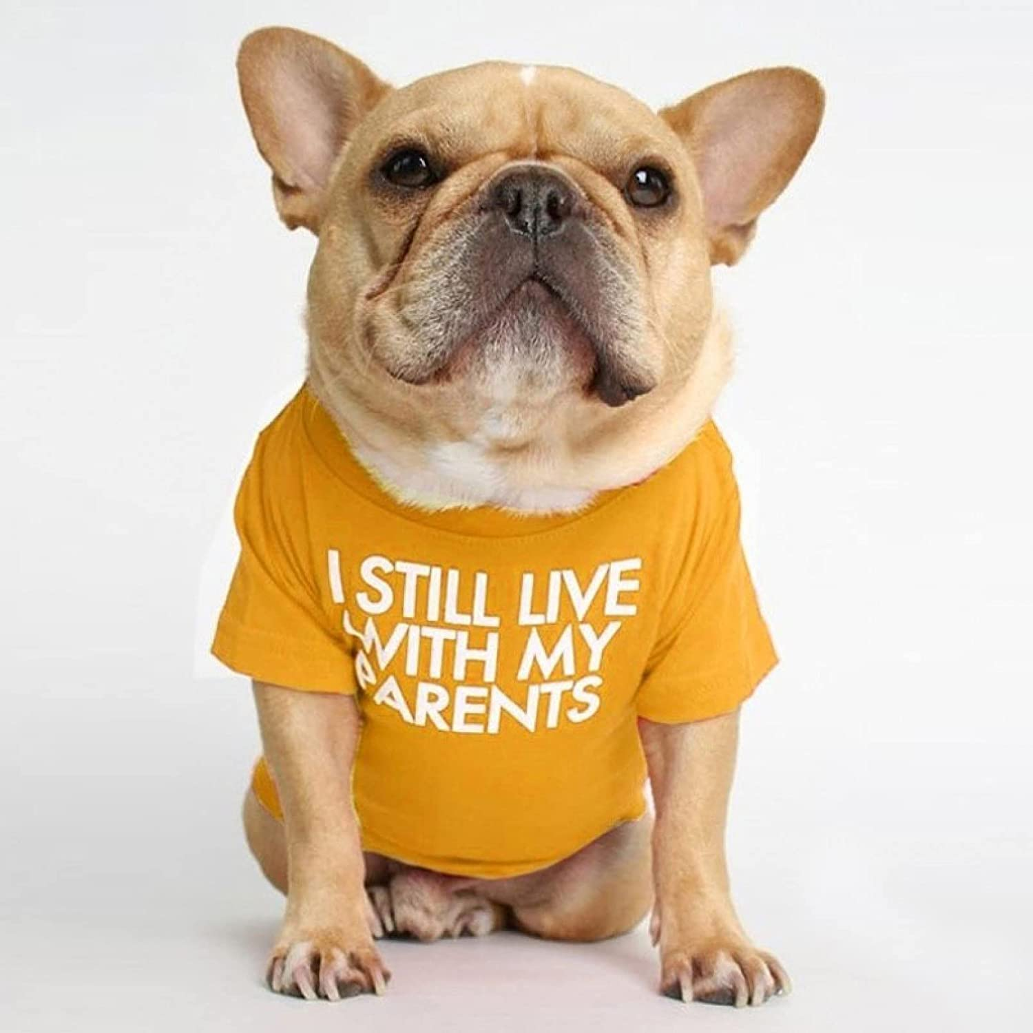 MDKAZ Clothes for Super sale period limited Free Shipping Cheap Bargain Gift Pets Letter Bulldog Shirt French Stret Printed