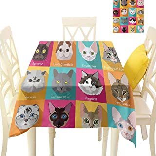 Alumeco Cat Lover Decor Square Tablecloths, Popular Breeds of Cats Abyssinian Burmese Sphynx Norwegian Forest Large Table Cover Linens for Dining Room, 70